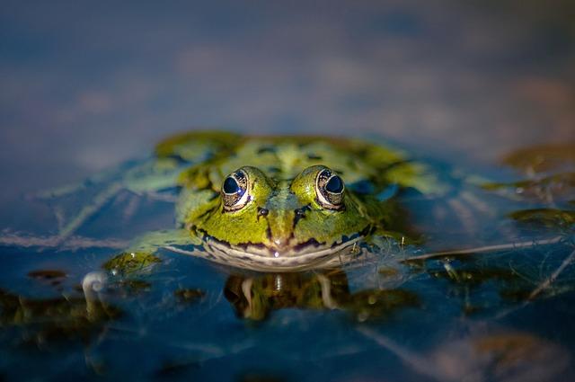 žába v jezírku